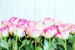 Fondo bianco di legno con le rose rosa Un posto per congratulat Fotografie Stock Libere da Diritti