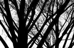 Fondo in bianco e nero degli alberi Fotografie Stock Libere da Diritti