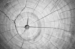 Fondo in bianco e nero della superficie del ceppo Immagine Stock