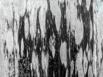 Fondo in bianco e nero di struttura di legno immagini stock