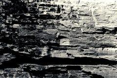 Fondo in bianco e nero di vecchia struttura di legno Fotografia Stock