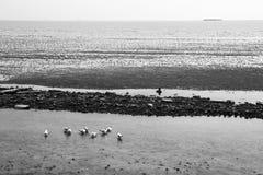 fondo in bianco e nero di vista sul mare Immagini Stock