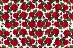 Fondo bianco eterogeneo con le rose rosse ed i germogli Fotografia Stock