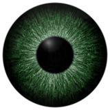 Fondo bianco isolato struttura di colore verde del bulbo oculare fotografia stock