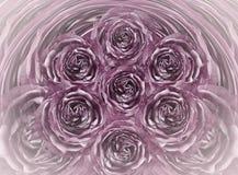 Fondo bianco-porpora floreale Fiorisce il primo piano porpora delle rose Fiorisce la composizione fotografia stock libera da diritti