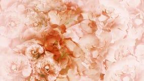 Fondo bianco rosso floreale l'annata bianca Rosso fiorisce le peonie collage floreale Composizione nel fiore Immagine Stock Libera da Diritti