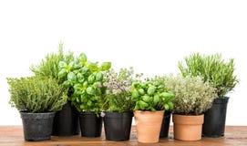 Fondo bianco saporito delle erbe del basilico del timo fresco dei rosmarini Immagine Stock Libera da Diritti
