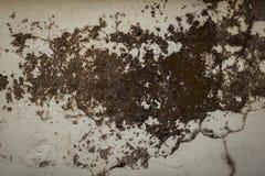 Fondo bianco sporco della parete Fotografie Stock