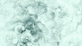Fondo bianco turchese floreale peonie bianche turchese dei fiori collage floreale Composizione nel fiore Fotografia Stock