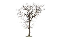 Fondo blanco aislado árbol muerto Imagen de archivo libre de regalías