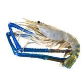Fondo blanco aislado gamba del camarón del agua dulce Foto de archivo libre de regalías