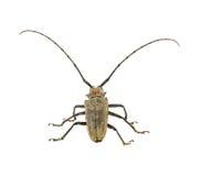 Fondo blanco aislado insecto imagen de archivo