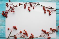 Fondo blanco con las ramas con las pequeñas manzanas, primer, visión superior Imagenes de archivo