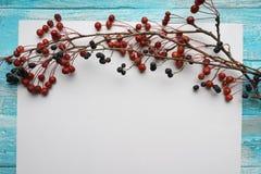 Fondo blanco con las ramas con las pequeñas manzanas y la baya negra de la alheña, primer, visión superior Foto de archivo libre de regalías