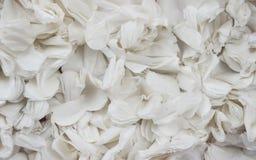 Fondo blanco con textura de las flores de papel foto de archivo libre de regalías