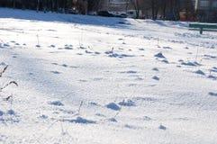 Fondo blanco de la nieve del invierno Fotografía de archivo libre de regalías