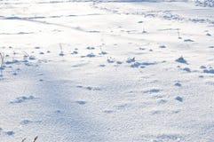 Fondo blanco de la nieve del invierno Imagenes de archivo