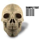 Fondo blanco del esqueleto Imagen de archivo