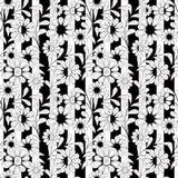Fondo blanco inconsútil de la raya del modelo de flores blancas Imagen de archivo libre de regalías