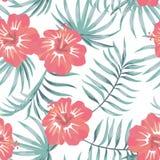 Fondo blanco inconsútil tropical del hibisco y de las hojas Imagenes de archivo