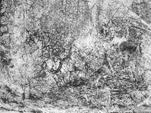 Fondo blanco y negro de Grunge Imagen de archivo