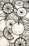 Fondo blanco y negro del garabato de naranjas Foto de archivo