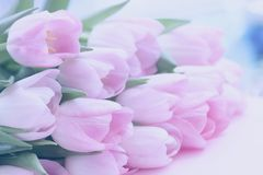 Fondo blando suave de tulipanes rosados con rocío La primavera florece, fondo floral en colores pastel romántico del extracto imagen de archivo