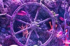 Fondo blu del mare dello swimmingwith tropicale variopinto del pesce fotografia stock