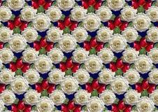 Fondo blu delle rose bianche del mazzo e dei germogli rossi Immagini Stock Libere da Diritti