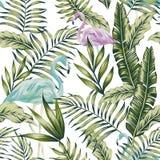 Fondo blu di bianco del fenicottero della giungla verde pastello Immagine Stock