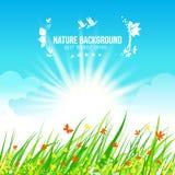 Fondo blu e verde del cielo e dell'erba, Fotografia Stock