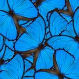 Fondo blu esotico con le linee nere piacevoli rese di velluto blu Fotografia Stock