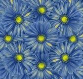 Fondo blu floreale Un mazzo dei fiori dalle gerbere blu-gialle Primo piano immagine stock libera da diritti