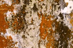 Fondo borroso abstracto de la vieja superficie de la pared con los puntos ásperos marrones, blancos y anaranjados imagen de archivo libre de regalías