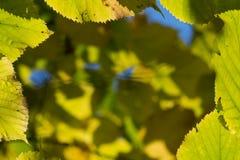 Fondo borroso con las hojas de otoño Foto de archivo libre de regalías