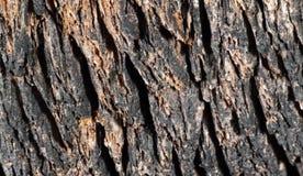 Fondo borroso de la corteza de árbol vieja con los modelos de la sombra Imágenes de archivo libres de regalías