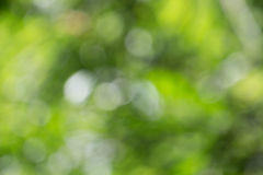 Fondo borroso de la naturaleza Foto de archivo libre de regalías