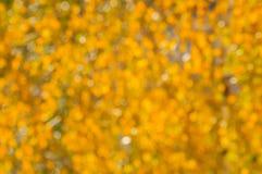 Fondo borroso del otoño de las hojas de otoño amarilleadas en tiempo soleado Imagen de archivo libre de regalías