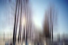 fondo borroso en bosque del invierno Imágenes de archivo libres de regalías
