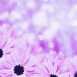 Fondo borroso frontera floral escénica, flores Fotografía de archivo