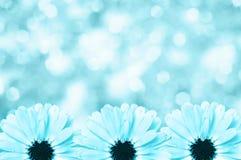 Fondo borroso frontera floral escénica, flores Fotografía de archivo libre de regalías