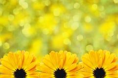 Fondo borroso frontera floral escénica, flores Imagenes de archivo