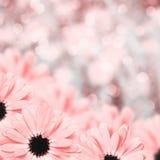 Fondo borroso frontera floral escénica, flores Imágenes de archivo libres de regalías