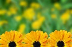 Fondo borroso frontera floral escénica, flores Fotos de archivo