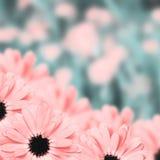 Fondo borroso frontera floral escénica, flores Fotos de archivo libres de regalías