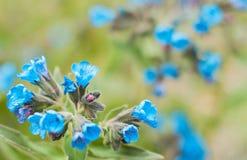 Fondo borroso frontera floral escénica, flores Imagen de archivo