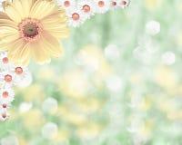 Fondo borroso frontera floral, manzanilla de las flores Foto de archivo