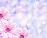Fondo borroso frontera floral, manzanilla de las flores Imagen de archivo