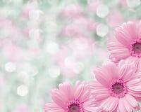 Fondo borroso frontera floral, manzanilla de las flores Fotografía de archivo