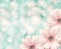 Fondo borroso frontera floral, manzanilla de las flores Fotos de archivo libres de regalías
